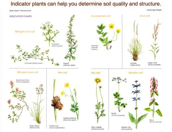 Indicator plants for Soil and plant lab