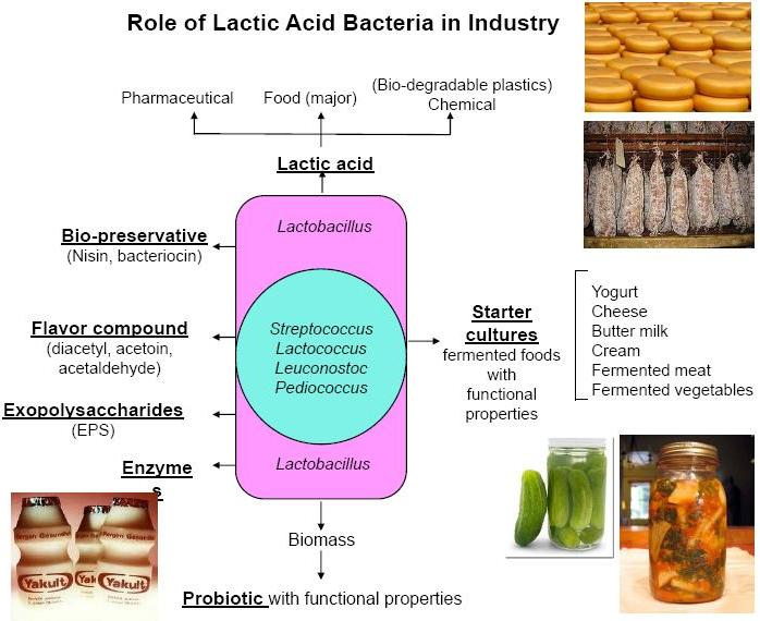 application of lactic acid bacteria Abstract lactic acid bacteria (lab) are a heterogeneous group of bacteria contributing to various industrial applications, ranging from food and beverage fermentation, bulk and fine chemicals production to pharmaceuticals manufacturing.